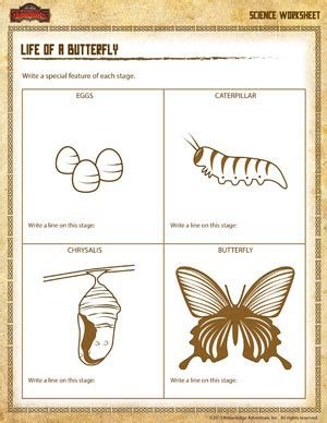 worksheet cycle of a butterfly free pdf printable