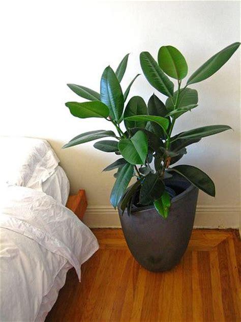 plantes pour chambre 17 best ideas about house plants on plants