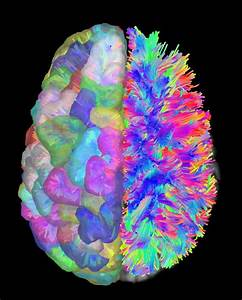 Brain Wiring Diagrams  Image