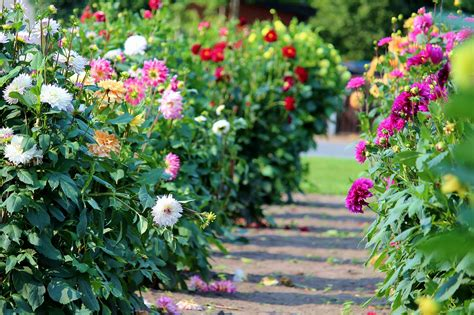 guest the best summer blooming flowers for your