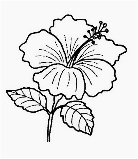 sketsa gambar bunga melati gambar sketsa hitam putih bunga