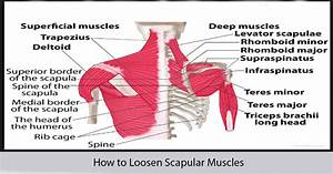 How to Loosen Scapular Muscles - World Wide Lifestyles ...