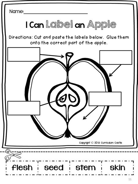 a and an worksheets for preschool 13 best images of apple activity worksheets apple 702