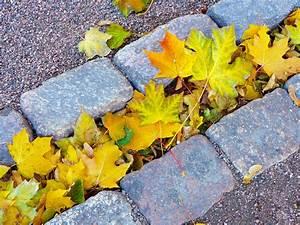 Kreativ Im Herbst : herbst deko aus kreativ beton ~ Lizthompson.info Haus und Dekorationen
