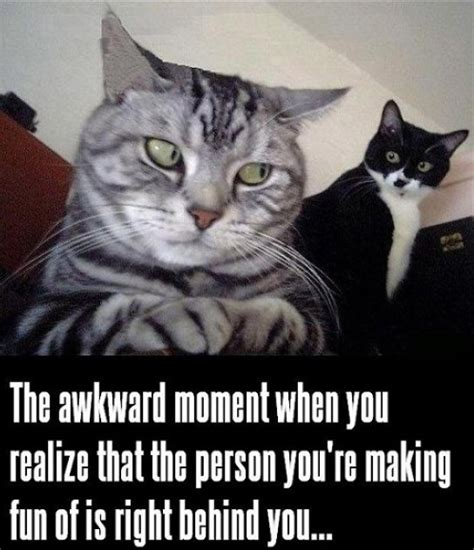 25 Funny Cat Memes Cattime