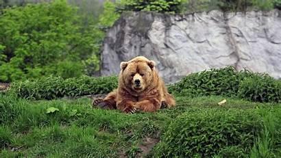 Animals Mammals Bears Bear Lion Dog Zoo