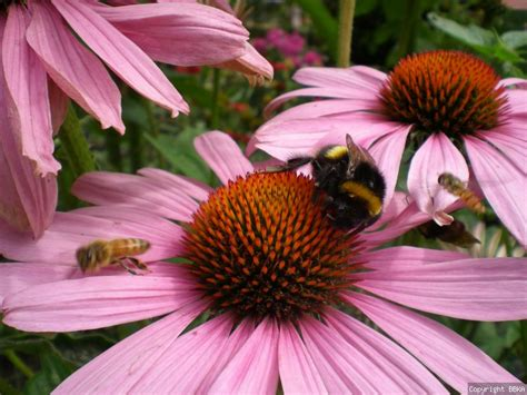 start a bee friendly garden with your child this easter