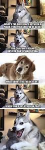 15 Pun Husky Meme Jokes are Insanely Cute - Dose of Funny
