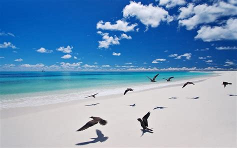 bird island in the seychelles nature tourism at its best
