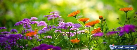 Beautiful Color Flowers Nature And Landscape Facebook
