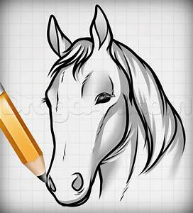 Draw Horse Heads And Faces  Step By Step  Pets  Animals