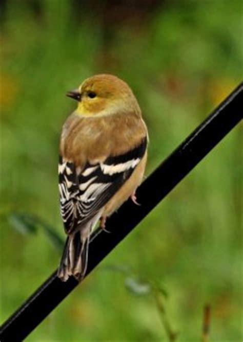 slidell louisiana wild bird pictures backyard birds