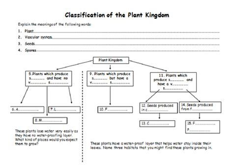 classification of plants and animals by jballmate teaching resources tes