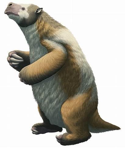 Sloth Transparent Megatherium Sid Age Ice Ground