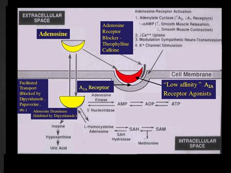 current methods  pharmacologic stress testing