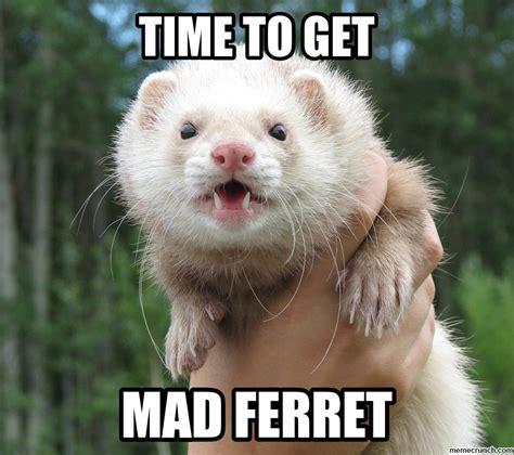 Ferret Meme - mad ferret