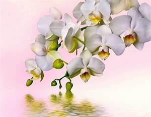 Luftwurzeln Bei Orchideen : bilder von orchideen bilder von orchideen wurzeln bei orchideen schneiden darf man luftwurzeln ~ Frokenaadalensverden.com Haus und Dekorationen