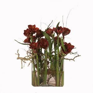 Amaryllis In Der Vase : couleur rouge ~ Lizthompson.info Haus und Dekorationen