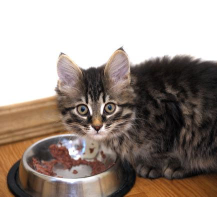 what to feed cats 3 reasons to feed your cat food pet naturals