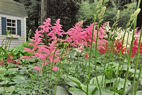 colorful plants for shade flowering shade plants colorful plants for shade curb appeal tips