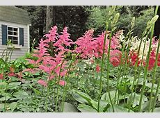 Flowering Shade Plants Colorful Plants for Shade Curb