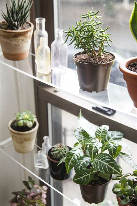 Best Indoor Window Plants by Diy Floating Acrylic Shelving For Plants In Front Of