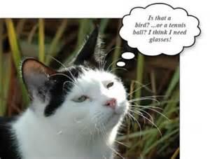 Cute Funny Talking Cats