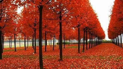 Fall Foliage Wallpapers Desktop Autumn Pixelstalk Leaves
