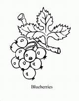 Blueberry Coloring Pages Blueberries Printable Sal Drawing Bush Colouring Template Berry Fruit Craft Mandala Crafts Kid Enjoycoloring Printables Popular Grape sketch template
