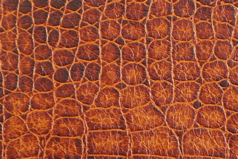 Animal Skin Wallpaper - animal skin wallpaper animal print wallpaper free
