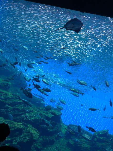 うみ の 杜 水族館