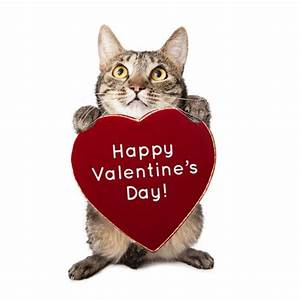 Cat With Valentines Day Heart — Stock Photo ...