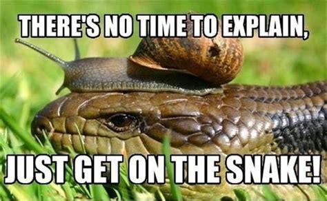 Funny Snake Memes - funny memes no time to explain dumpaday 13 dump a day