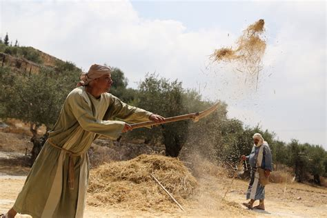 Threshing Floor Bible Verse by Threshing And Winnowing In Biblical Times Nazareth