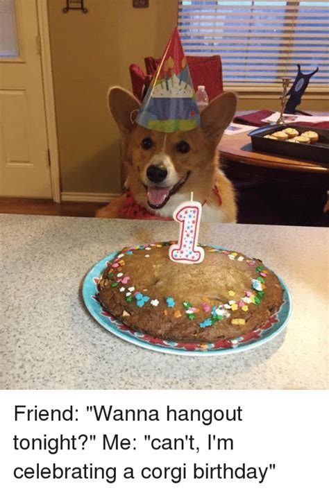 Corgi Birthday Meme - t friend wanna hangout tonight me can t i m celebrating a corgi birthday corgi meme on me me