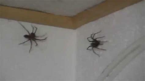 spider attack   office  fette spinnen im buero youtube
