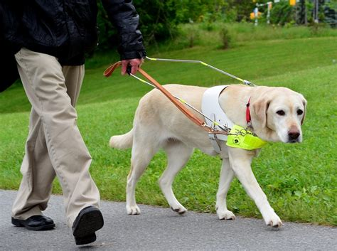 Facts About Guide Dogs