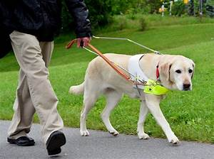 Facts About Guide Dogs | From Goats To Soaps