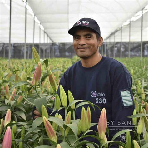 sande callas mds workshop sponsor feature sande flowers
