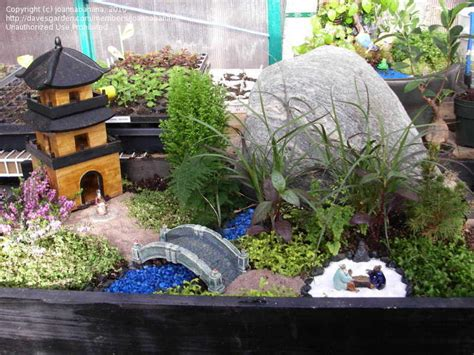 specialty gardening miniature japanese garden 1 by
