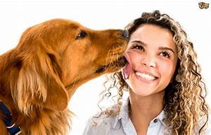 Dogs and licking - How to stop your dog from licking you ...