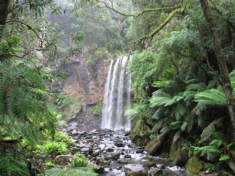 Australia An Island Continent: Gondwana Rainforest