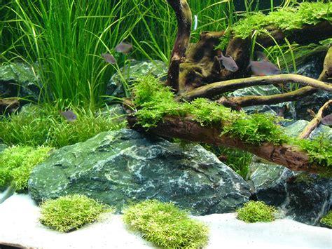 Aquascaping Forum - mein erstes scape 200l aquarienvorstellung aquascaping