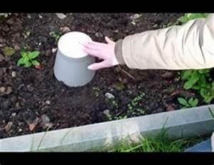 Rote Ameisen Im Rasen : video rote ameisen im garten was tun ~ Lizthompson.info Haus und Dekorationen