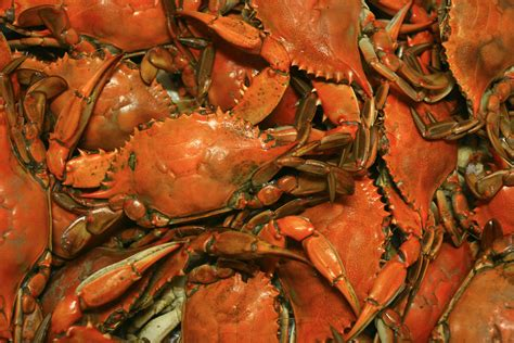 how to boil crab recipe for boiling crabs