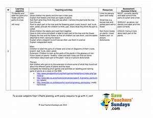 Parts Of A Plant  U0026 A Tree Lesson Plan  U0026 Worksheet