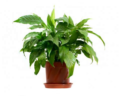 Different Types Of Plants To Spruce Up Your Home