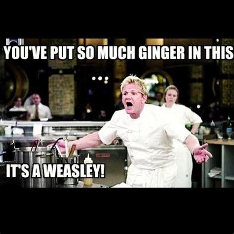Best Gordon Ramsay Memes - gordon ramsay memes funny pinterest gordon ramsay and meme