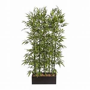 Bambus Als Zimmerpflanze : bambus zimmerpflanze kaufen bambus kaufen bambus einebinsenweisheit bambus buddhas bauch ~ Eleganceandgraceweddings.com Haus und Dekorationen