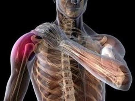 Shoulder Pain Rotator Cuff Exercises